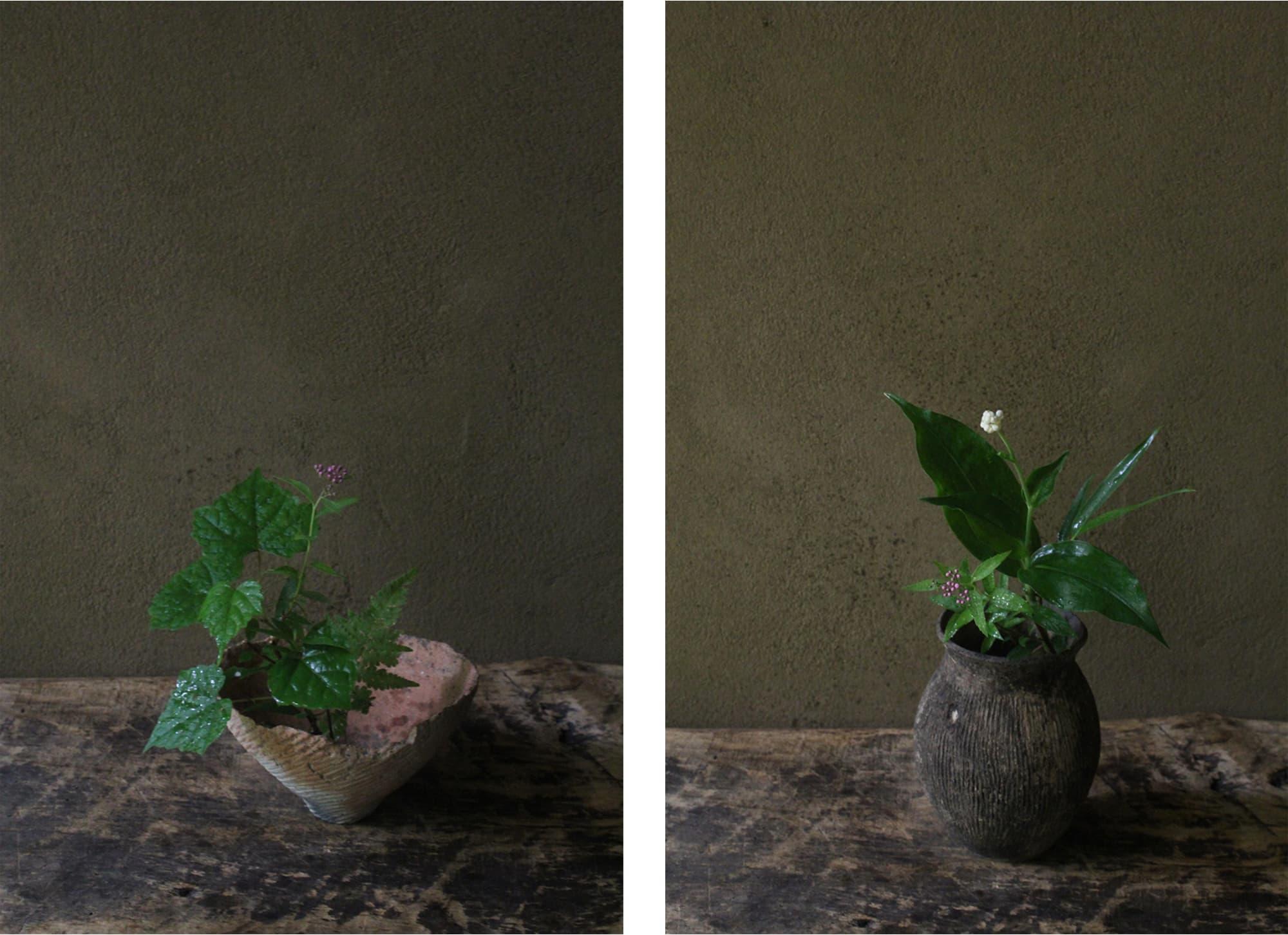 花人・坂村岳志のいける生け花。左:その季々に美しいと感じたものをその姿のままにいける。 右:季節を感じ、その空間に必要とされている花や緑をいけていく。