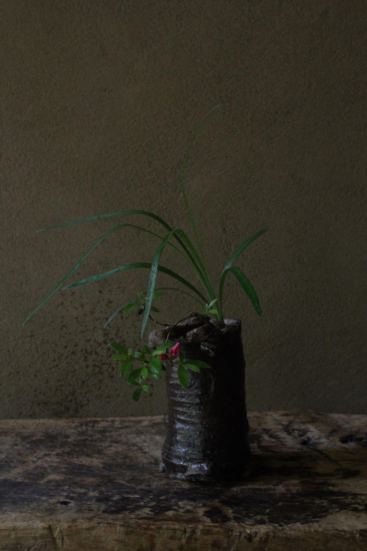 花人・坂村岳志の活ける生け花。静かでありながらも息づかいを感じる。自然の神秘がそこにある。