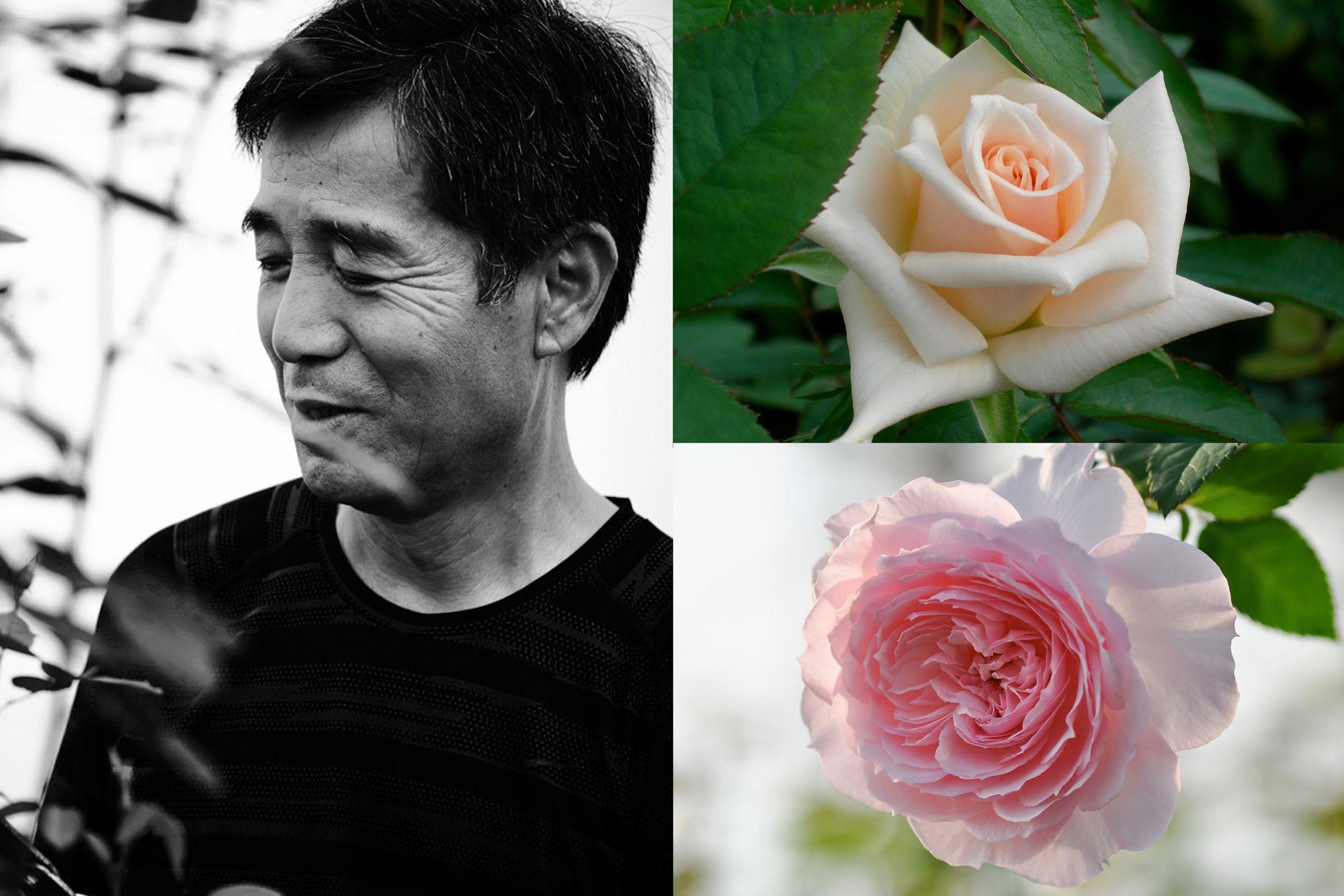 画像左:ばら作家の國枝啓司。画像右上:「プリンセスマサコ」画像右下:「美咲」