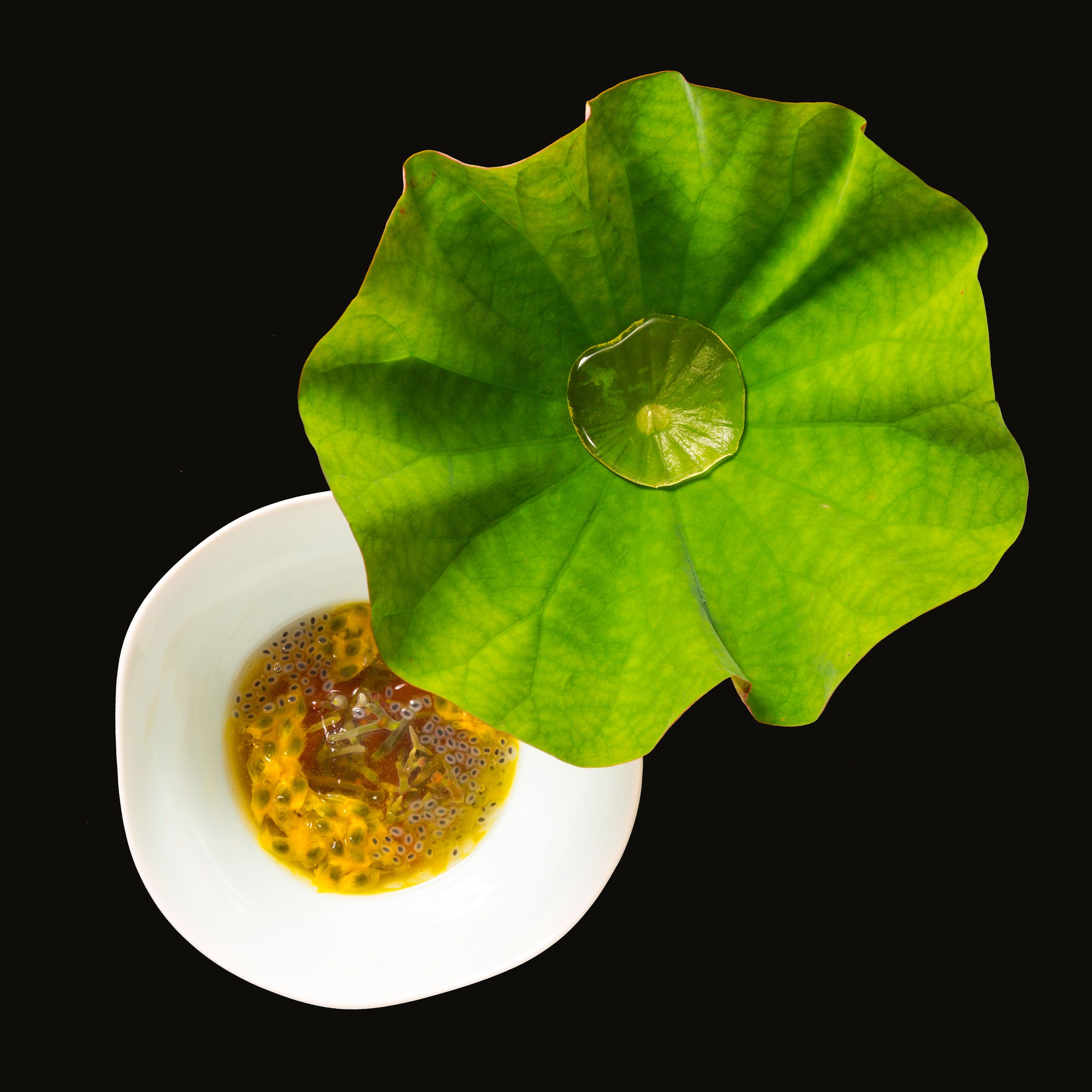 A recipe of Den which came 11th place at the World's 50 Best Restaurants 2019—the highest among all Japanese restaurants that participated. The dewdrop on the lotus leaf situated on the plate, is broth. Vegetables of the season such as junsai (water shield) are beautifully presented—to be enjoyed with broth on the lotus leaf.