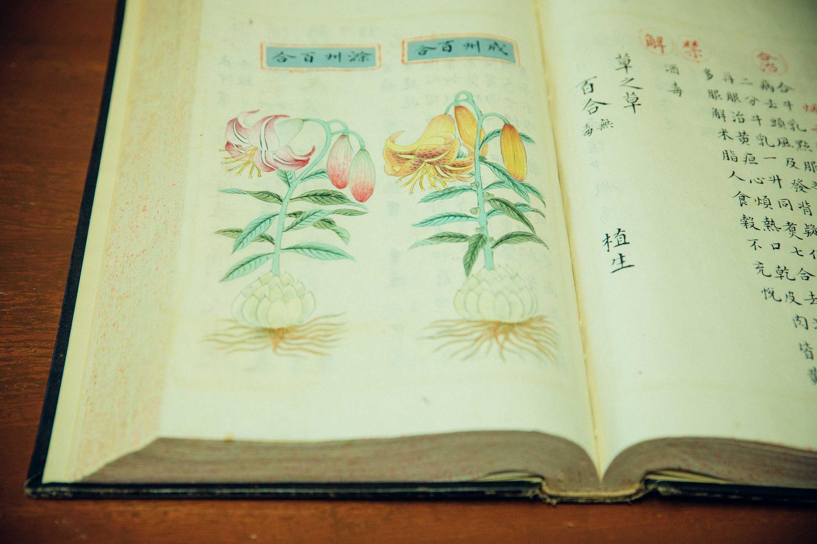 大塚医院の蔵書には貴重なものが多い。これは2代目の大塚恭男医師が入手した中国・明朝の生薬の本。すべて手書きで美しい。百合の根は漢方として使用されている。