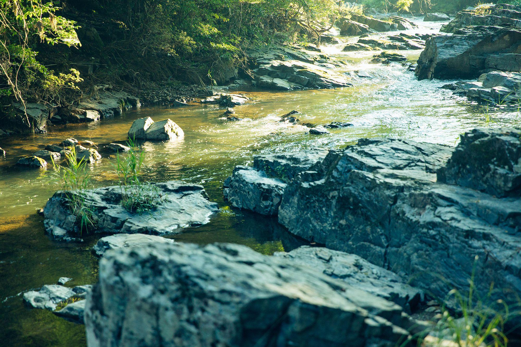 すぐそばには、オオサンショウウオが生息するという、清らかな椋梨川(むくなしがわ)がある。