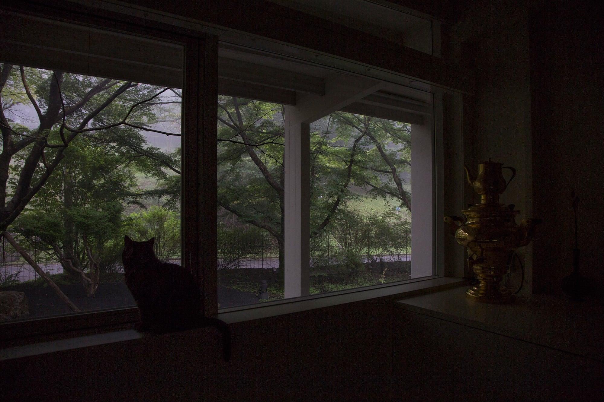 大きく張り巡らされた枝木が、部屋に差し込む光に影を落とす。ゲストルームの窓から庭を眺めるのは、愛猫の天子(てんこ)さん。