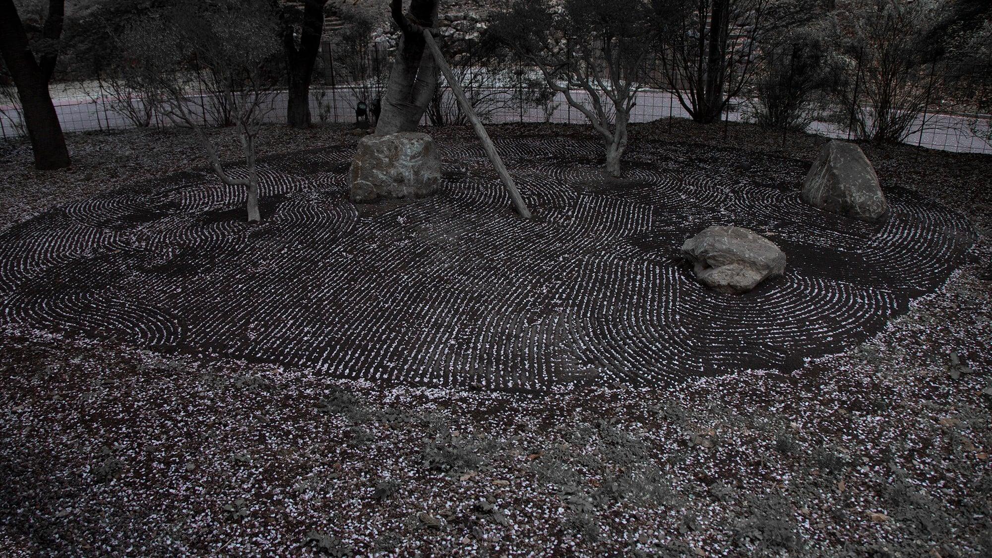枯山水の溝に桜の花びらが落ち、春の庭は桜色になる。