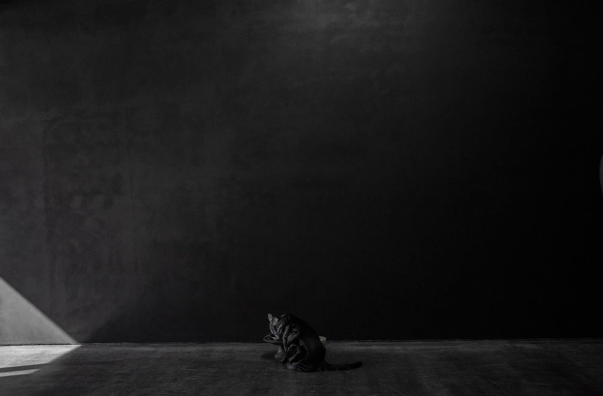 墨黒の壁の前に佇む天子さん。