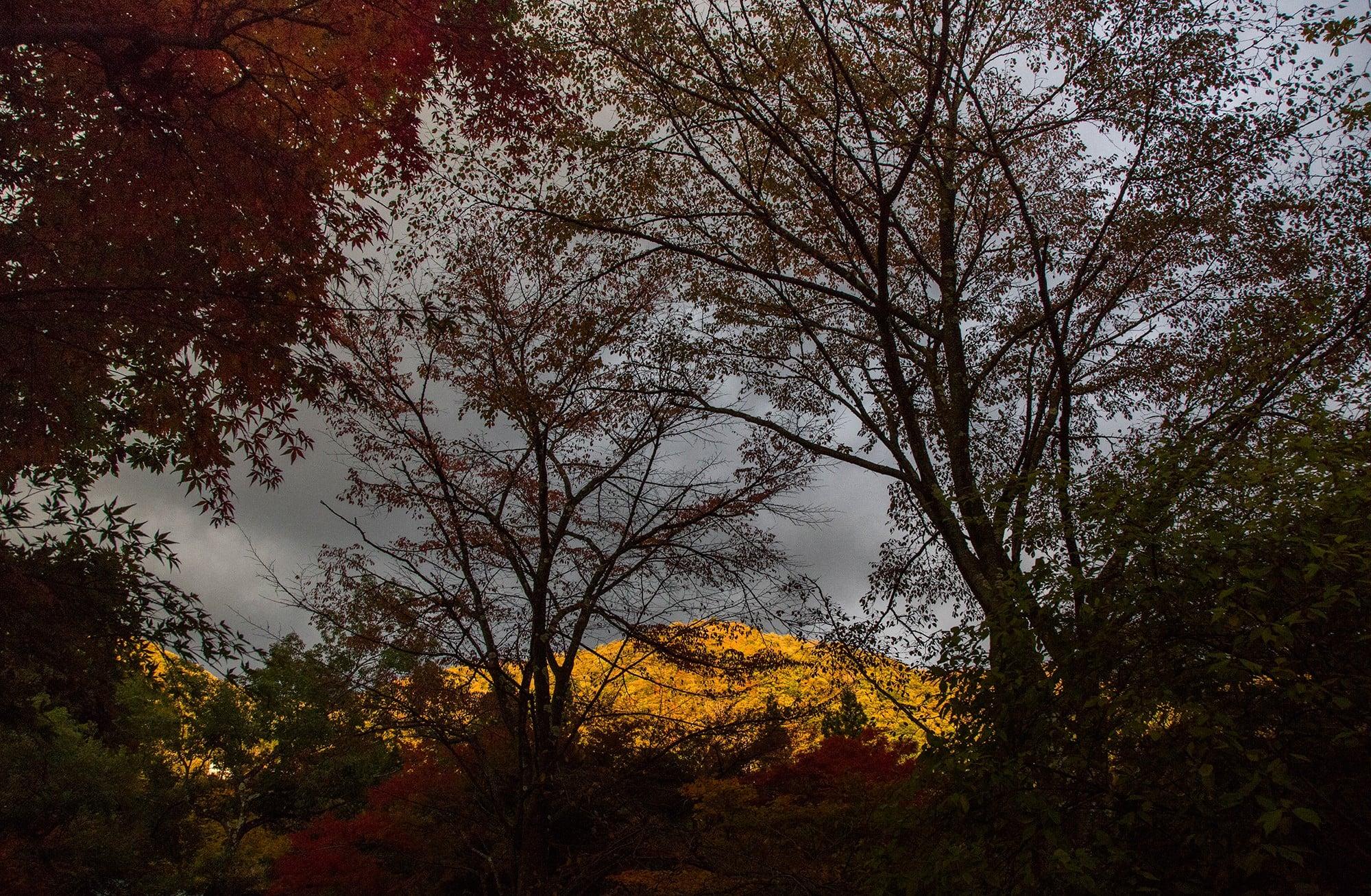 木々のすき間から望む夕日に染まる山々。その姿が幻想的に浮かび上がる。