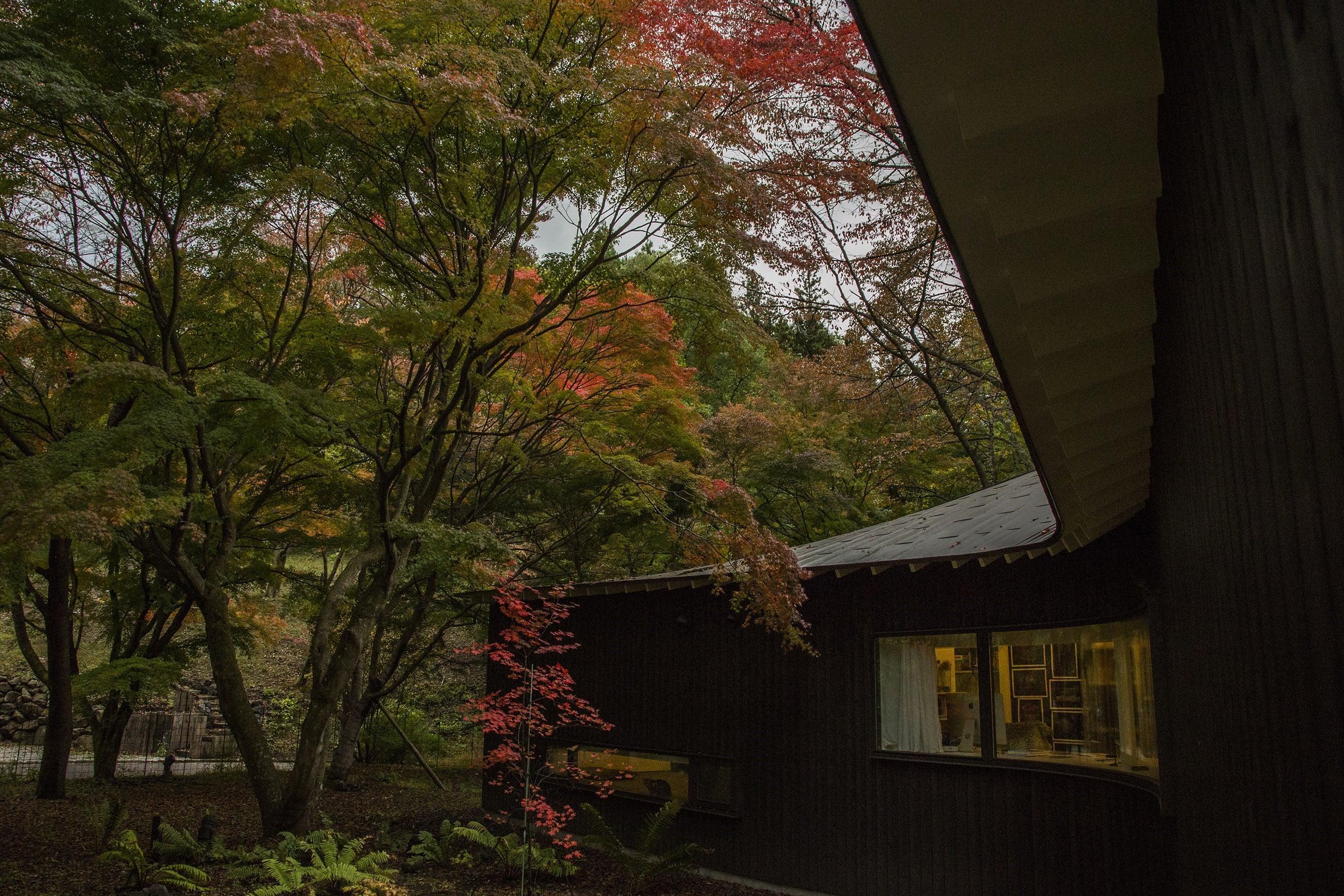 写真家・高木由利子の切り撮る軽井沢の自邸の<秋冬>