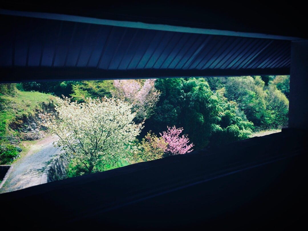 桜の頃、岡山の山中にある自邸の庭。二階の窓からの風景。