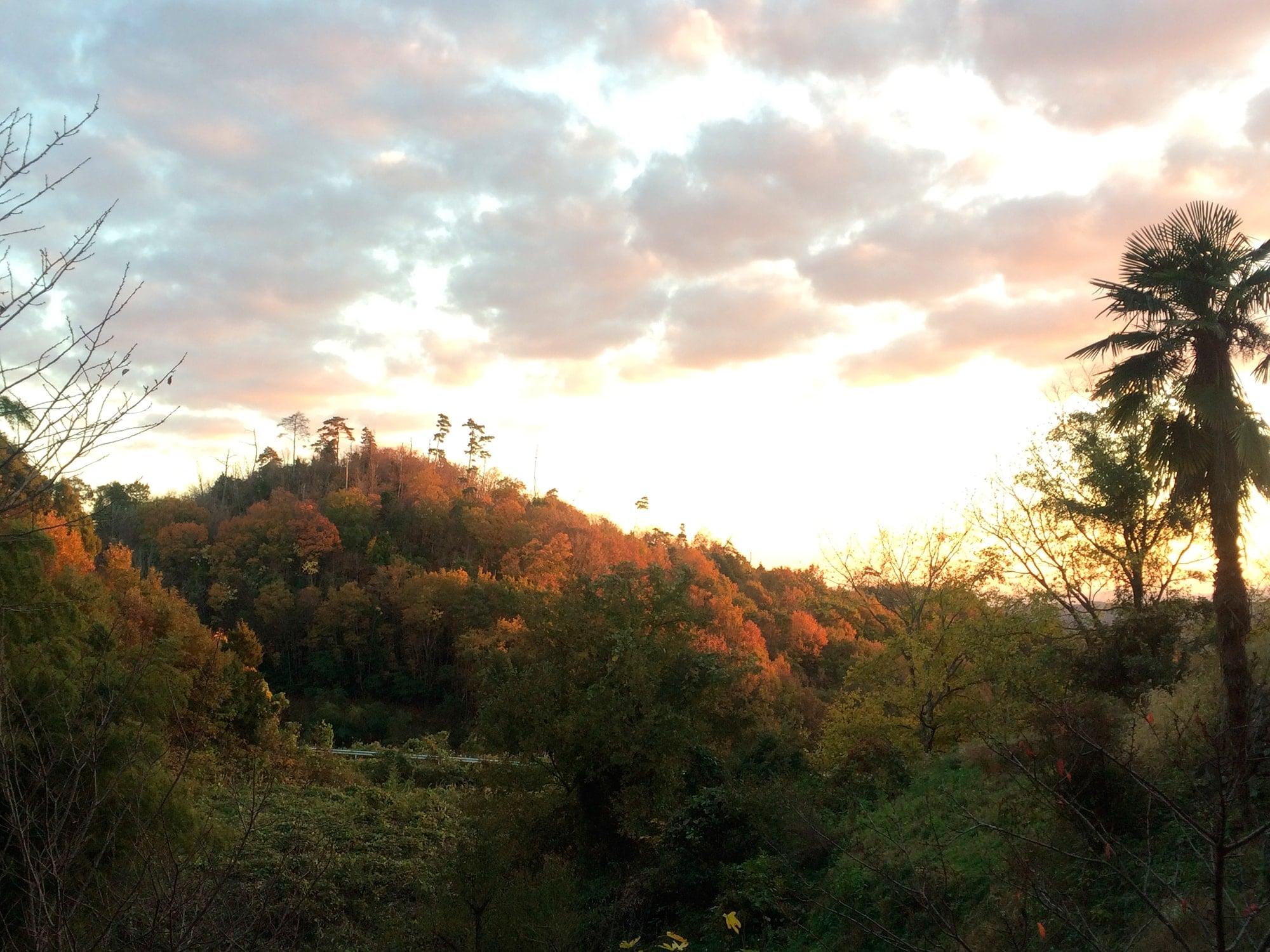 アトリエから見る風景。庭と向かいの山が見渡せる。