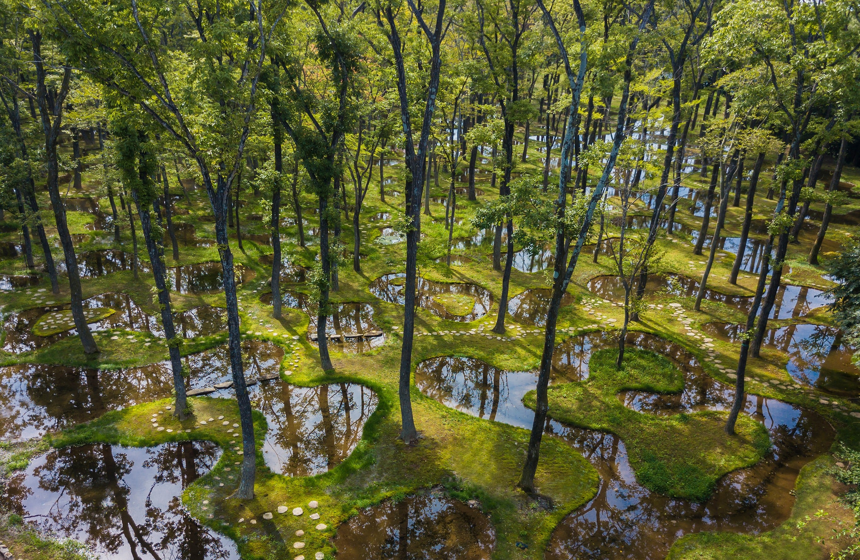 建築家石上純也のデザインによるボタニカルガーデン アートビオトープ「水庭」